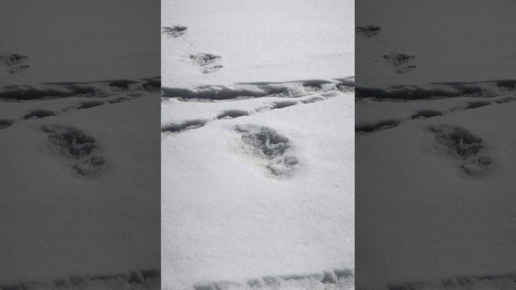 yeti foot print